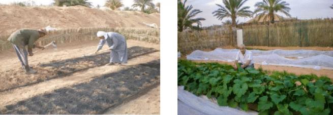 Lettre d'information - Pro-natura International septembre 2021 : Verdir le Sahel grâce au biochar
