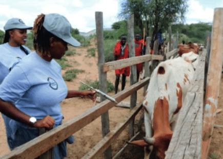Entretien - Formation des para professionnels vétérinaires : un gage d'efficacité d'un réseau de professionnels en santé animale