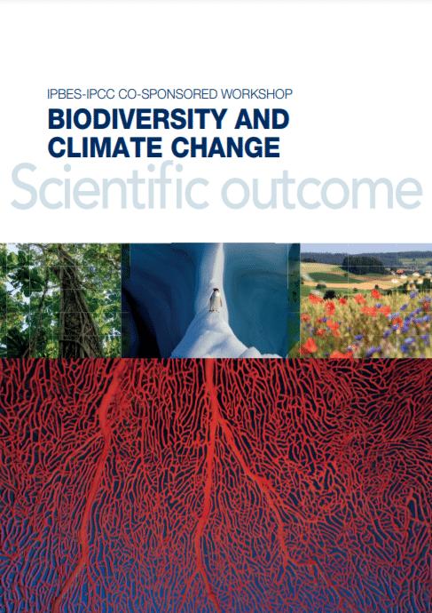 Rapport scientifique- Crise du climat et de la biodiversité : une lutte commune