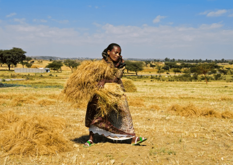 Article - Small farms outdo big ones on biodiversity — and crop yields