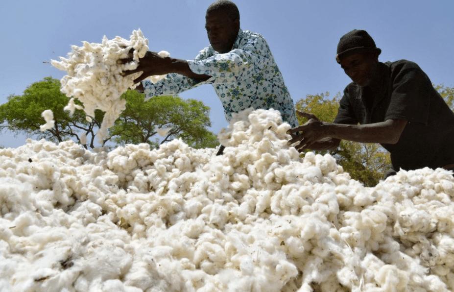 """Tribune - Le scénario """"Fleur du désert"""" : de réelles possibilités de développement pour les pays du Sahel"""