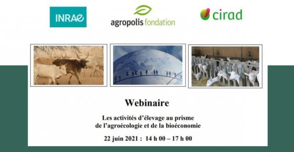 Webinaire - Les activités d'élevage au prisme de l'agroécologie et de la bioéconomie