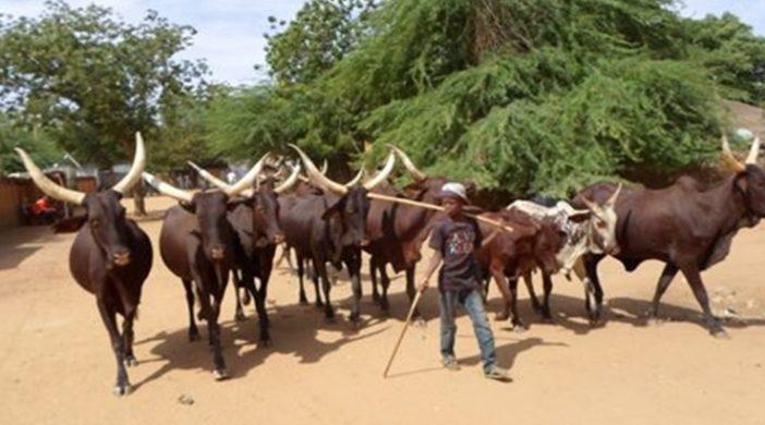 Bulletin de surveillance pastorale sur le Niger - Avril-Mai 2021