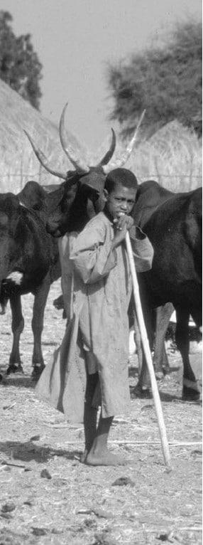 Jeune berger peul. © P. Dugué (Cirad)