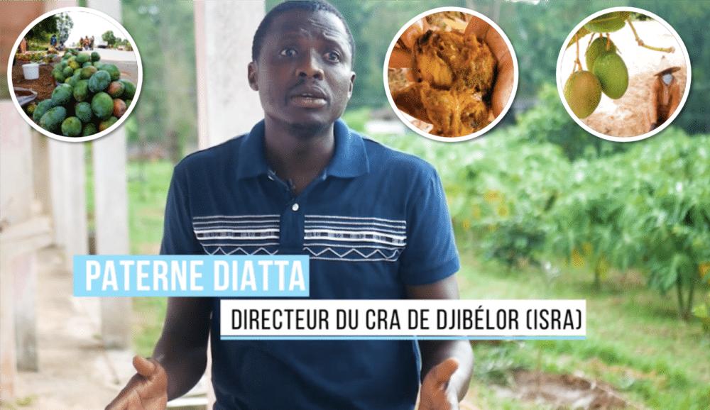 Mangue moi si tu peux : Un reportage sur les mouches des fruits en Casamance !