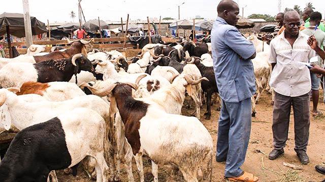 Plan stratégique de développement de l'élevage au Togo