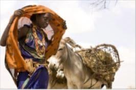 La FAO approuve l'Année internationale des parcours et des pasteurs !