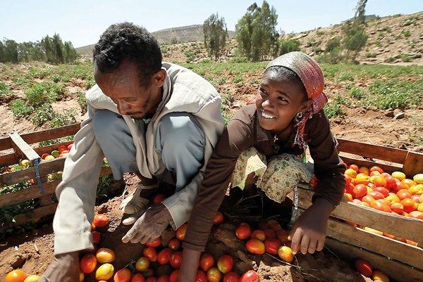 Le mythe du vieillissement des agriculteurs africains