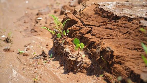 Le sol, passerelle naturelle entre le climat et l'agriculture