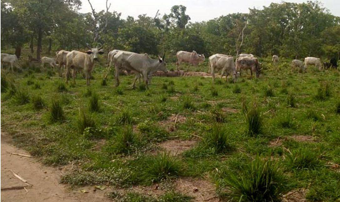 Vulnérabilité et dynamiques adaptatives des agropasteurs aux mutations climatiques dans la commune de Tchaourou au Bénin