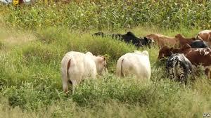 Conflits agriculteurs-éleveurs : Des mécanismes de règlements existent