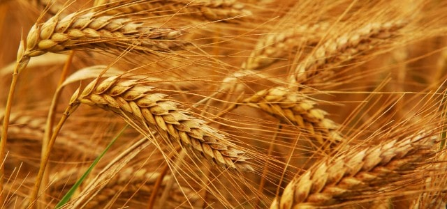 USDA Report: Nigeria Grain and Feed Annual 2014