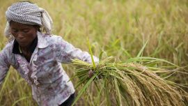 Rapport Oxfam: Construire un nouvel avenir agricole: soutenir l'agro-écologie pour la planète et l'humanité