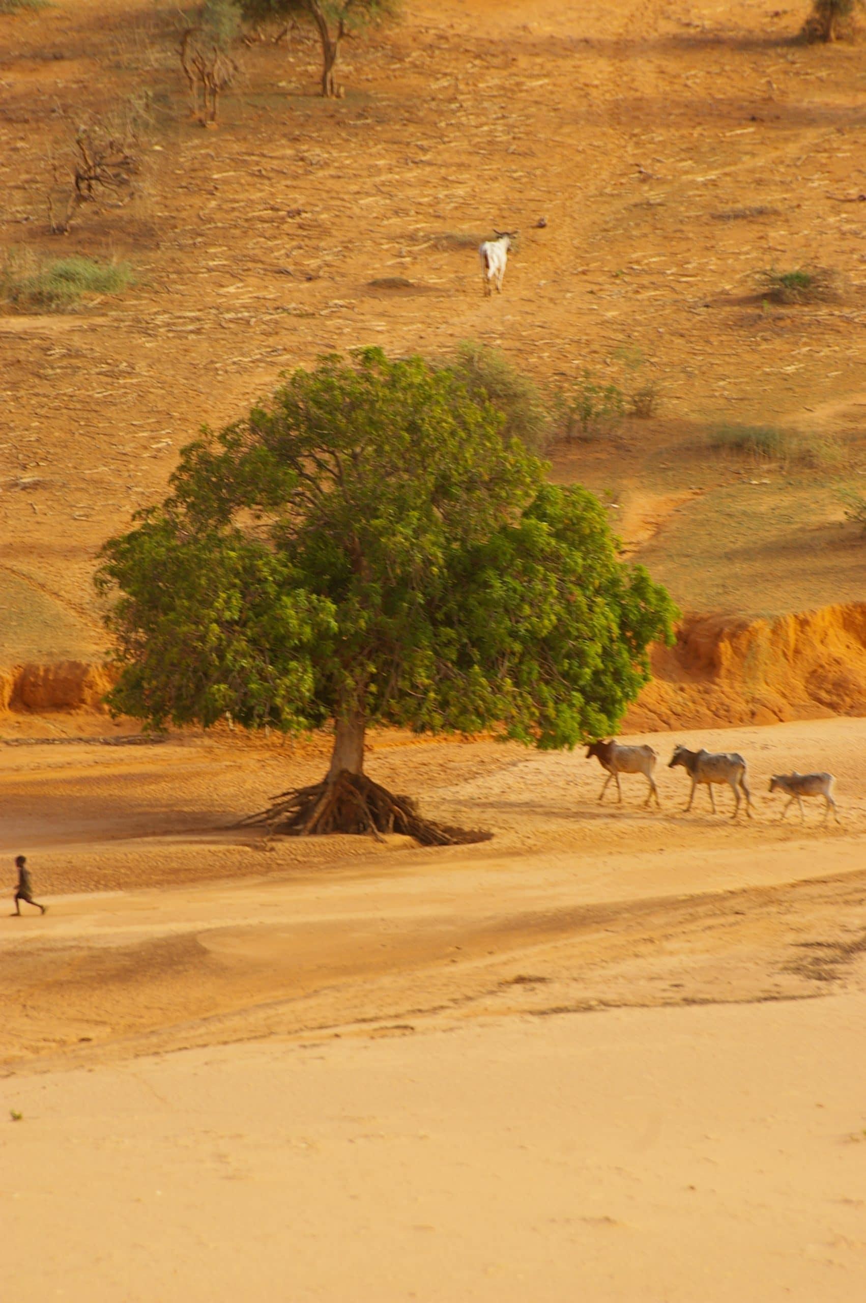 Note de la CCD : Intégrer la contrainte climatique dans les projets de développement