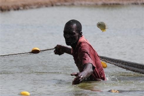 IRIN : Malgré son potentiel, la Casamance fait face à des pénuries