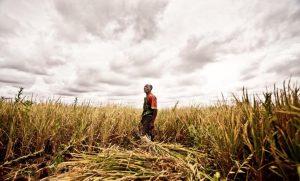 Le G8 et sa Nouvelle Alliance: une menace pour la sécurité alimentaire et nutritionnelle en Afrique ?