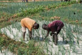 Presse : La Côte d'Ivoire adopte une stratégie nationale de protection sociale