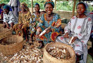 Article: Le Nigeria va-t-il abandonner sa politique de mélange du manioc ?