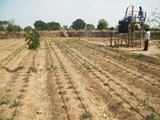Enquête Agrimex sur la dynamique et les freins à la diffusion du système d'irrigation goutte-à-goutte au Niger