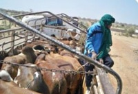 CILSS : Flux transfrontaliers de produits agricoles et d'élevage en Afrique de l'Ouest (avril 2014)