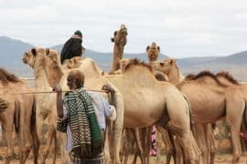 Pastoralism in Ethiopia: new briefings and paper