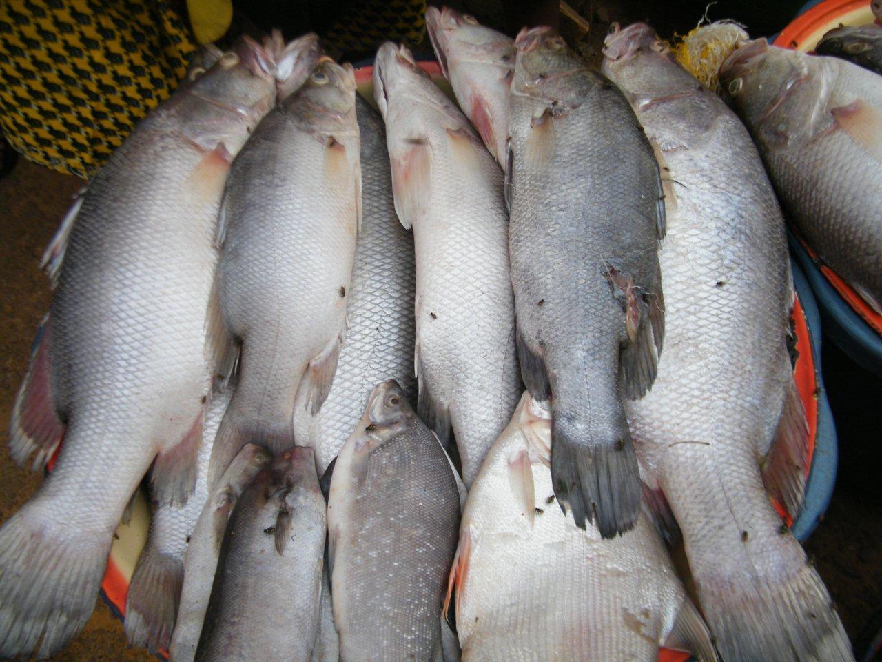 Déclaration : Quel futur pour les pêcheries sénégalaises ?