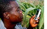 Article: Les agriculteurs testent une nouvelle plateforme en ligne (Ghana)