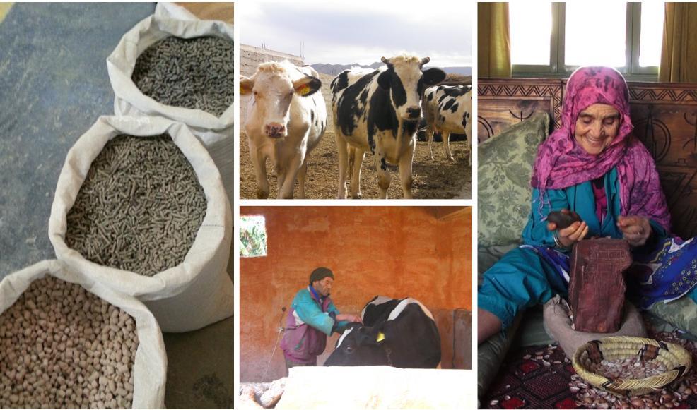 Rapport: les OP, vecteur de développement économique des exploitations familiales: Etudes de cas au Maroc de la COPAG (filière lait) et de l'ANCA (filière huile d'argan)