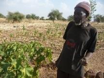 Intégration du Jatropha dans les exploitations agricoles familiales: Etude de cas au Burkina Faso et au Bénin