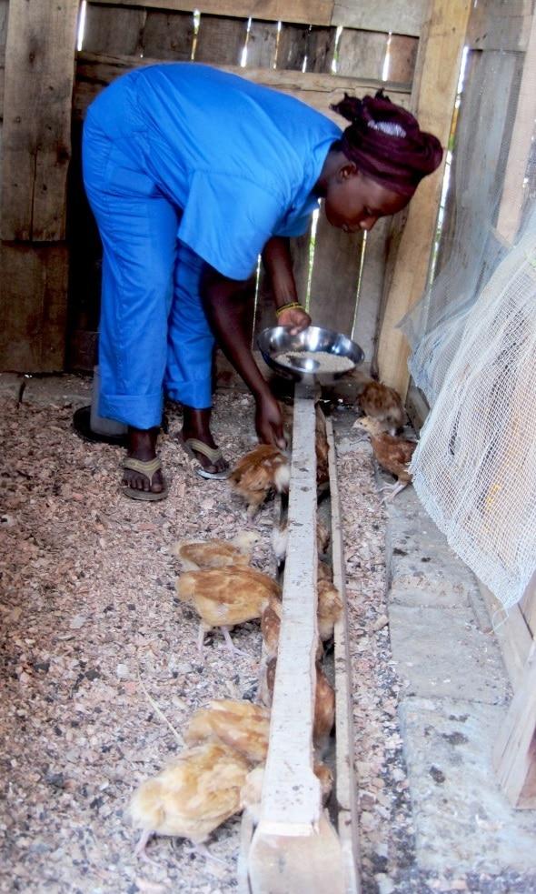 Article CTB : Le programme Pavage et l'aviculture au Burundi