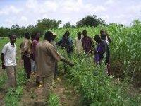 Libéria : Revue diagnostique des dépenses publiques dans le secteur agricole