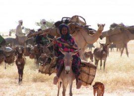L'élevage pastoral au Sahel : entre menaces réelles et atouts incontestables