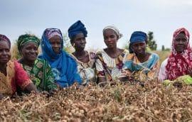 Les lois semencières qui criminalisent les paysannes et les paysans : résistances et luttes