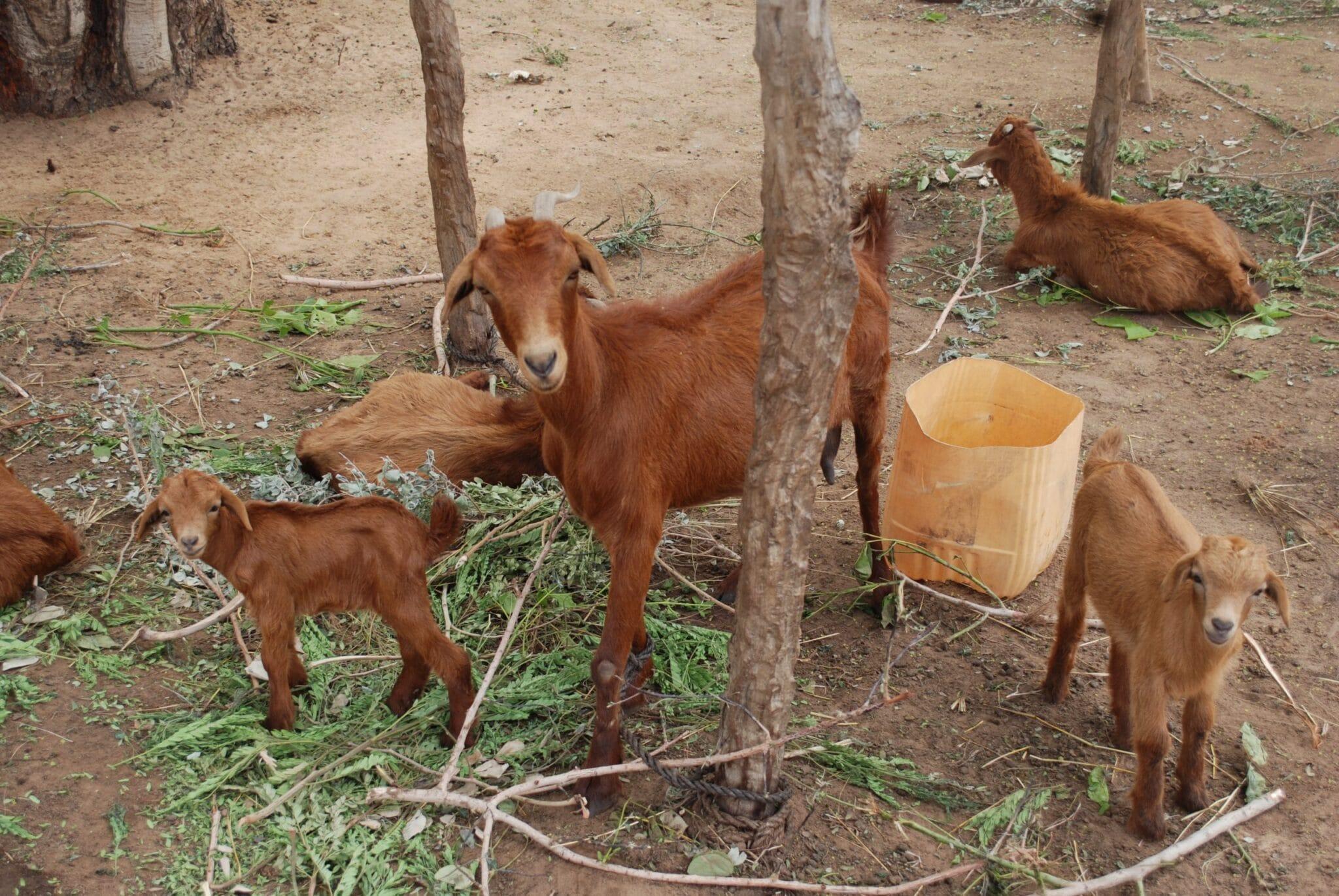 Avis conjoint sur la situation alimentaire et nutritionnelle au Sahel et en Afrique de l'Ouest