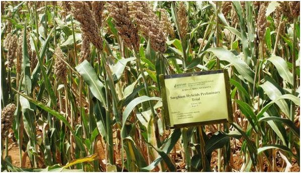Towards an Integrated Market for Seeds and Fertilizers in West Africa