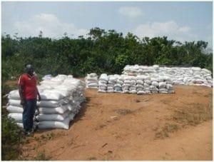 Innovation paysanne : La « fiente de poulet » dans les cacaoyères de Côte d'Ivoire