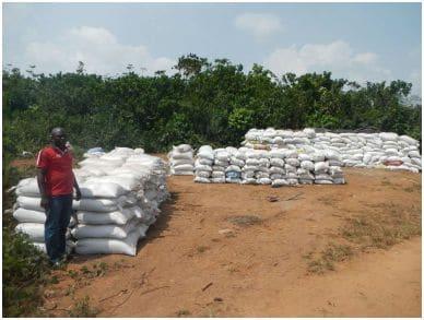 Innovation paysanne : La « fiente de poulet » dans les cacaoyères de Côte d'Ivoire, une révolution agroécologique et sociale
