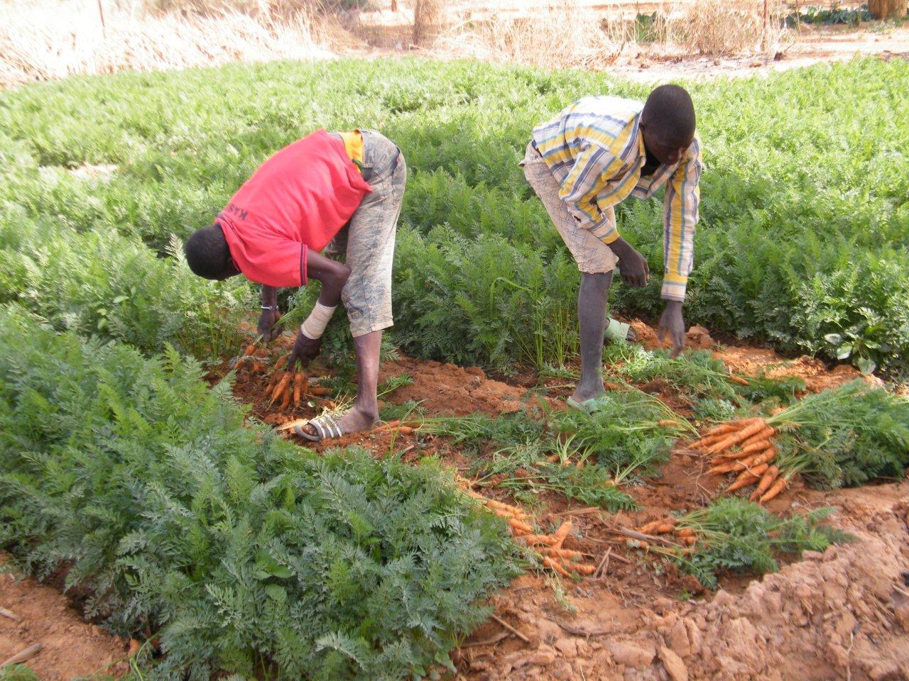 Radio : La Journée nationale du Paysan à Dédougou au Burkina Faso