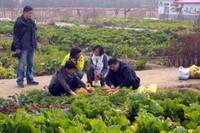 Farming Matters: Rural-urban linkages