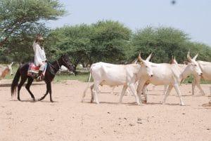Cartographie des acteurs régionaux du pastoralisme en Afrique de l'Ouest
