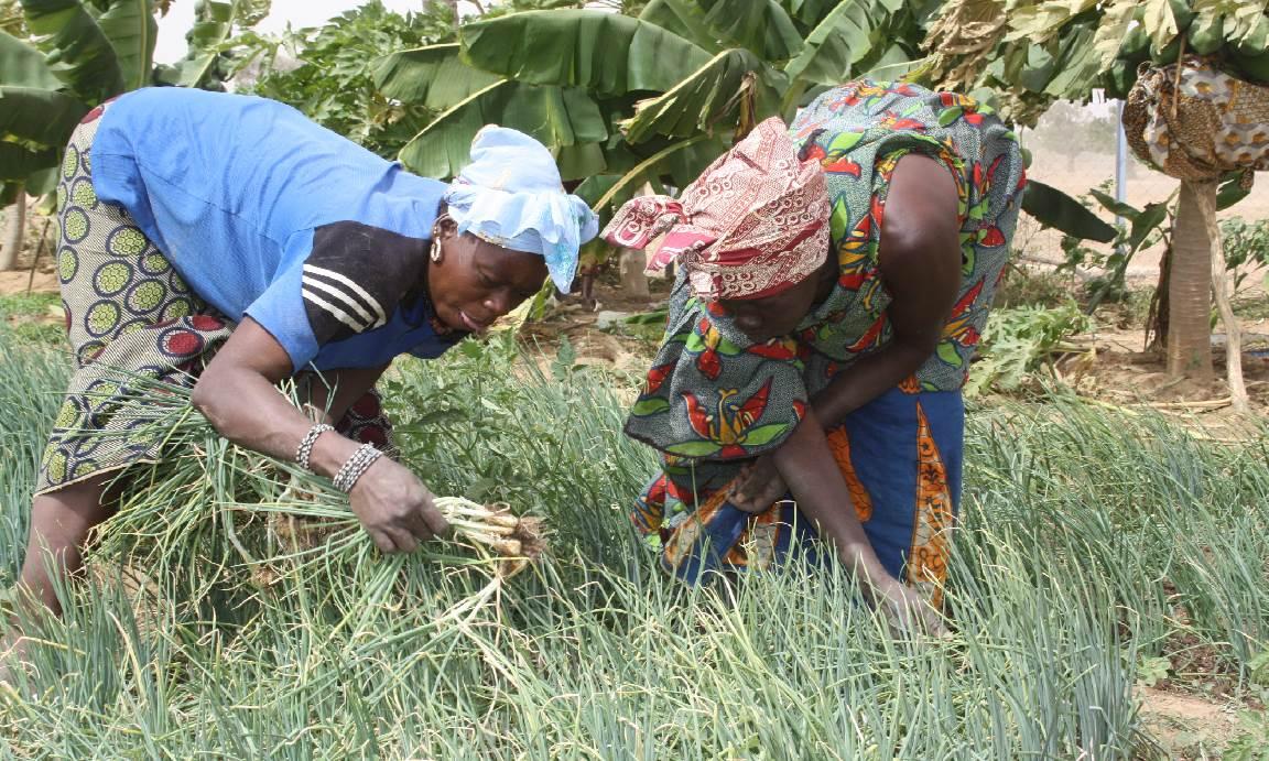 Productions d'articles sur l'accès au foncier pour les femmes, la démarche tylay et le CEF au Burkina Faso