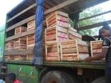 Note : Les arrivées de produits maraîchers de la CEDEAO sur le marché de Niamey