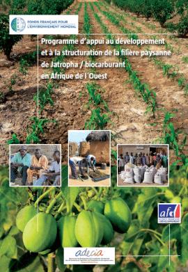 Notes et études sur la filière Jatropha en Afrique de l'Ouest