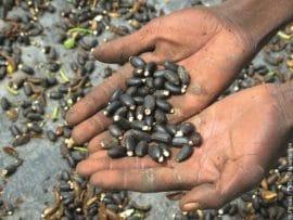 Séminaire Jatroref-Adecia sur la filière Jatropha en Afrique de l'Ouest