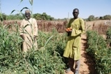 Niger : sites de production de tomates