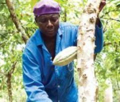 Partenariats à long terme dans l'agriculture en Afrique : les quatre enseignements de l'expérience d'Olam