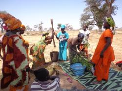 Entretien Agrisud : Connecter les exploitations familiales agroécologiques aux marchés porteurs