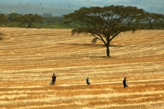 Making agriculture in Africa climate-smart: From continental policies to local practices