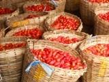 Fiches techniques pour les cultures maraîchères : tomate