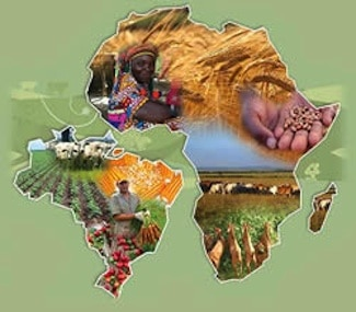 Innovative partnerships for agricultural research and development: Examining the Africa-Brazil agricultural innovation marketplace